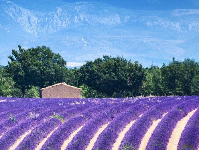 La Provenza, visita guidata: Aix en Provence, la Camargue, Avignone