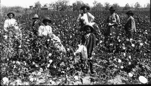 Campo cotone sud States